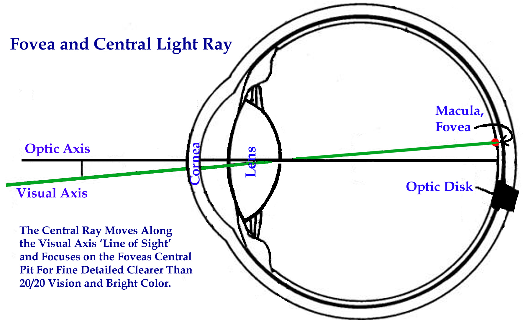 The Visual Axis and Central Ray, Fovea
