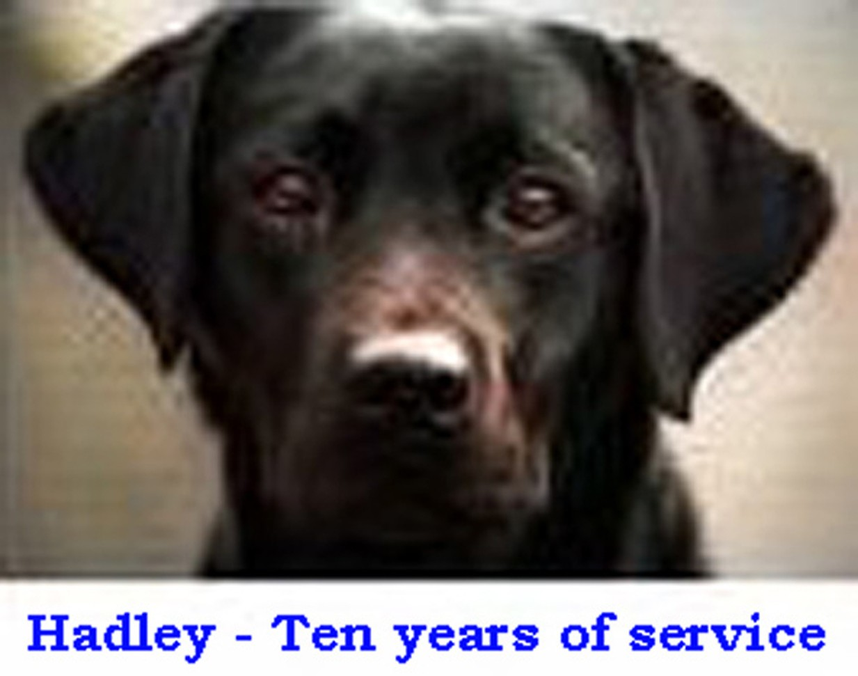 Hadley,; Guiding Eyes for the Blind