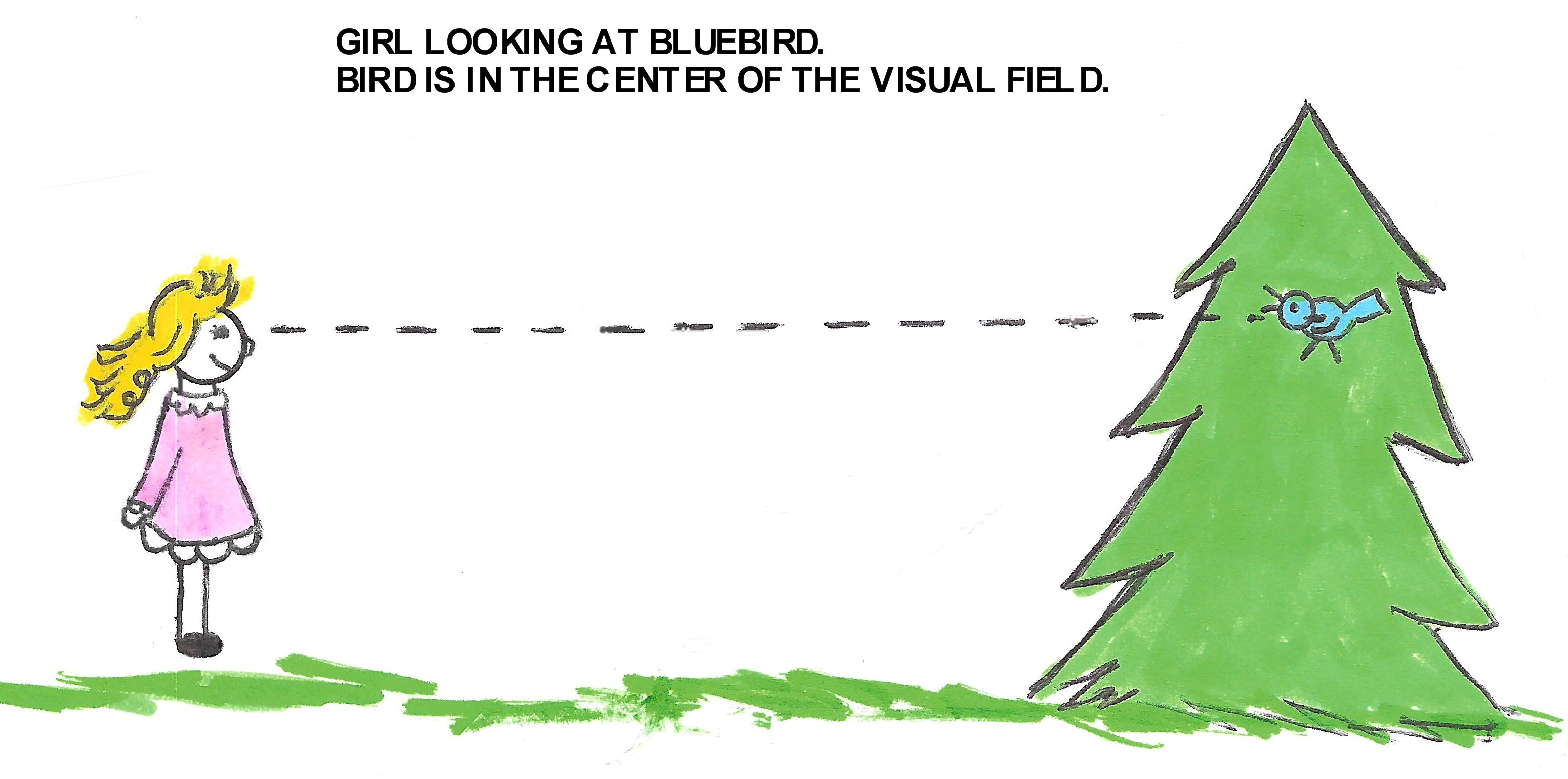 CENTRAL- FIXATION - Seeing clearest with the center of the visual ...